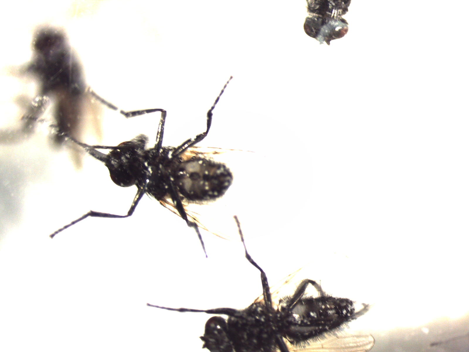 nyttedyr og produkter mod fluer