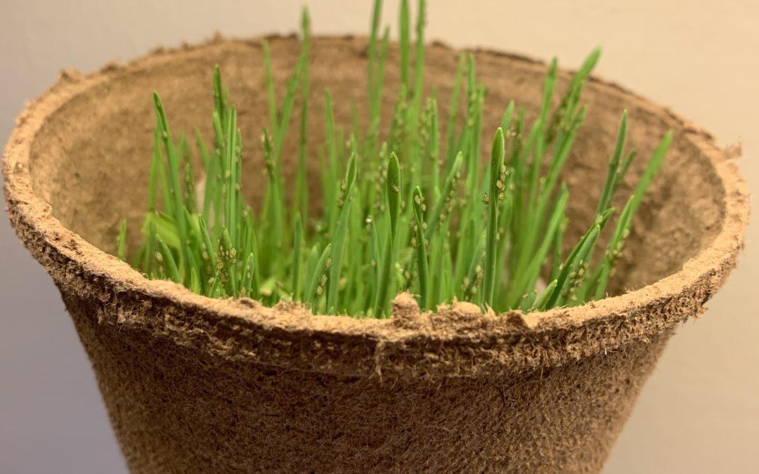 Banker planter i miljøvenlig emballage