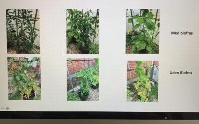Fremtidens gødning BioFras, med muligheder især i økologiske væksthuse.