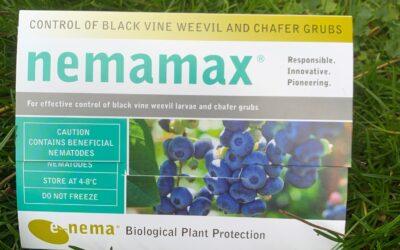 Nemamax – Ny nematode mod øresnudebiller og gåsebiller ved lavere temperaturer